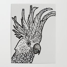 Excited Cockatoo Poster