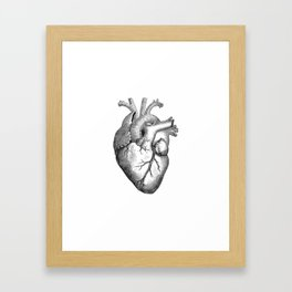 Real Anatomical Human Heart Drawing Framed Art Print