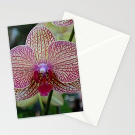 Peabody Orchid I Stationery Cards