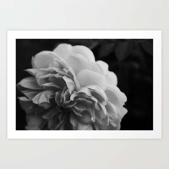 Wildeve Rose No. 2 - Black & White Art Print