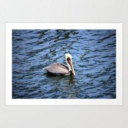 Floating Pelican Art Print