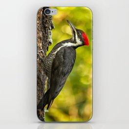 Female Pileated Woodpecker No. 2 iPhone Skin