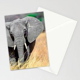 Elephant 2 Stationery Cards
