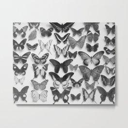 Wings II Metal Print