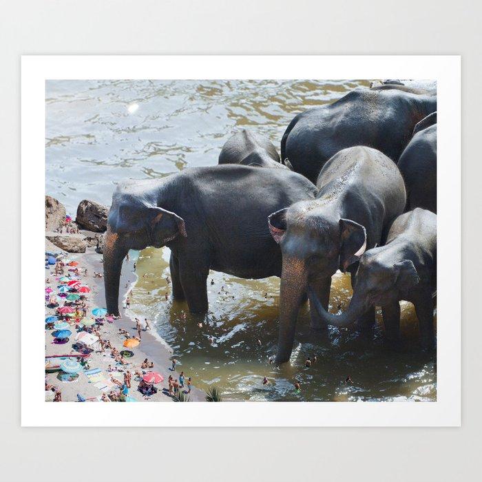 Elephant Beach Art Print