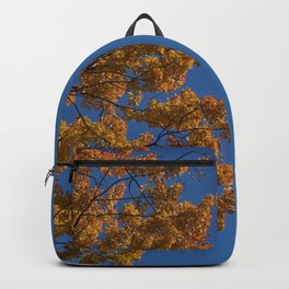 Trees in the fall #montreal Backpack