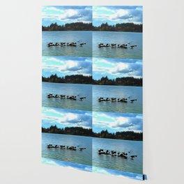 Canada Geese Wallpaper