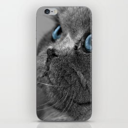 Grey Persian Cat with Blue Eyes iPhone Skin