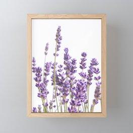 Purple Lavender #1 #decor #art #society6 Framed Mini Art Print