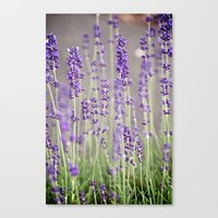 lavender Canvas Prints featuring Lavender by A Wandering Soul