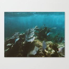 Mexican Caribbean Sealife Canvas Print