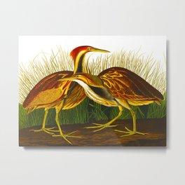 American Bittern Audubon Birds Vintage Scientific Hand Drawn Illustration Metal Print