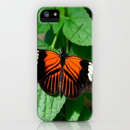 Perched Doris Longwing Butterfly iPhone Case