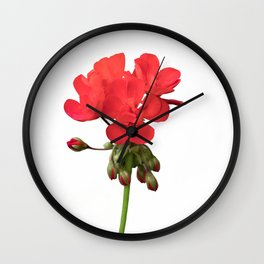 isolated red geranium in bloom Wall Clock