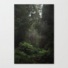 Fog Through The Ferns Canvas Print