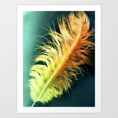 Flamin' Feather Art Print