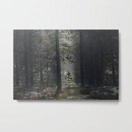 Patience (Norwegian Forest) Metal Print