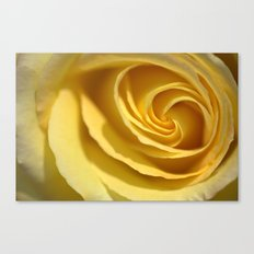 Creme de Rose  1213 Canvas Print