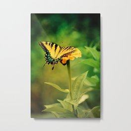 Yellow Swallowtail Butterfly on Zinnia Metal Print