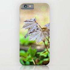 Baby Maple Slim Case iPhone 6s