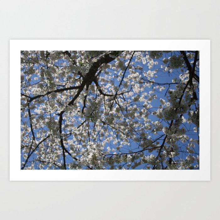 Apple Blossom Sky Art Print