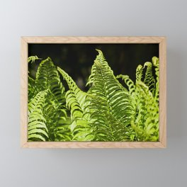 Fern 9 Framed Mini Art Print