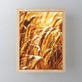 grain field Framed Mini Art Print