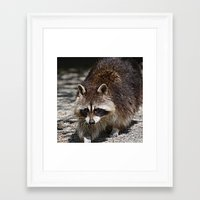 racoon Framed Art Prints featuring Racoon by MehrFarbeimLeben