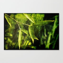 Bamboo 2 Canvas Print