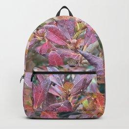 Halla-Mountain autumn leaves , Jeju Island, Korea. Backpack