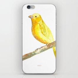 Aquarela Canarinho iPhone Skin