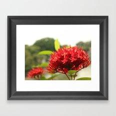 Crimson Focus Framed Art Print