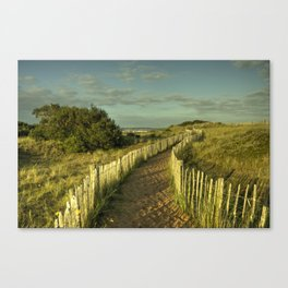 Dawlish Dunes  Canvas Print