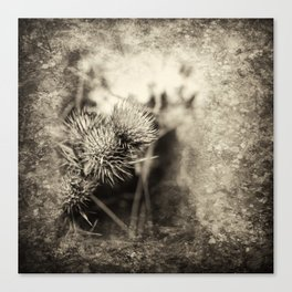 Beautiful thistle growing wild and sepia texture Canvas Print