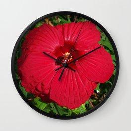 Hibiscus 'Fireball' - regal red star of my late summer garden Wall Clock