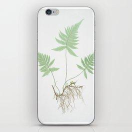 Botanical Beech Fern iPhone Skin