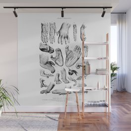 Primate Hands and Feet Wall Mural