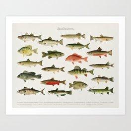 Illustrated North America Game Fish Identification Chart Art Print