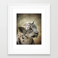snow leopard Framed Art Prints featuring Snow Leopard by Jai Johnson