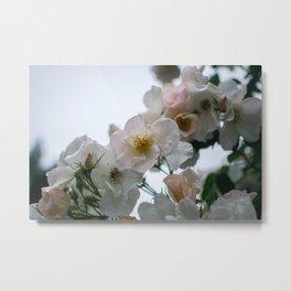 Roses and Raindrops: White Metal Print