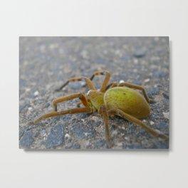 Green Spider Metal Print