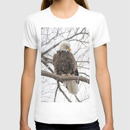 Bald Eagle on a branch T-shirt