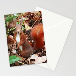 Do you have nuts for me? Stationery Cards