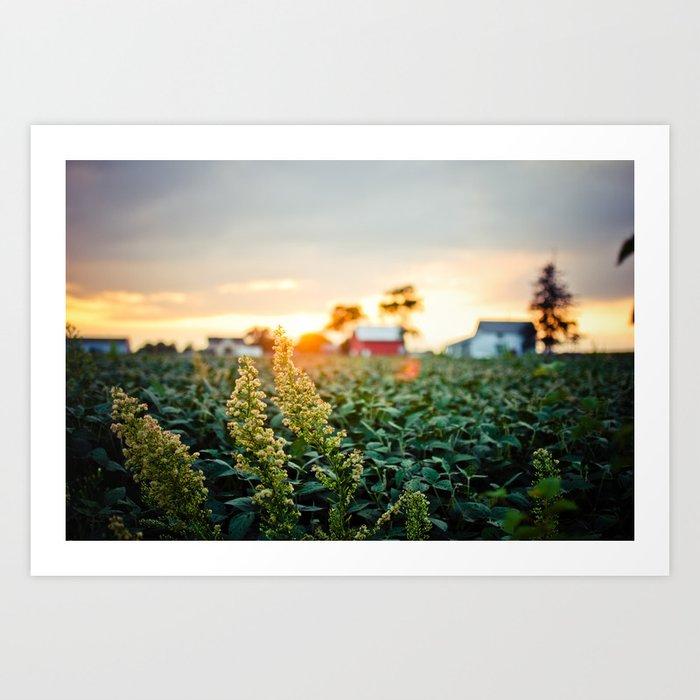 Rustic Midwest Farm  Art Print