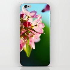 Pink Flowers Blue sky iPhone & iPod Skin
