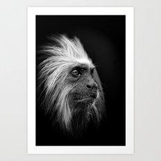 Golden Headed Lion Tamarin Mono Art Print