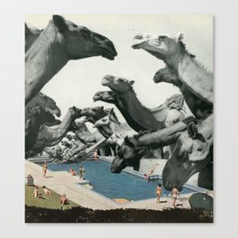 Thirsty Camels Canvas Print