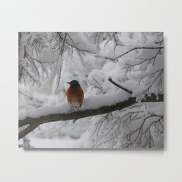 Surpised by the snow Metal Print