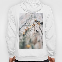 Forest Finds - III Hoody