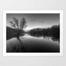 Tree Lake Art Print